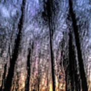 Motion Blurred Trees In A Forest Poster