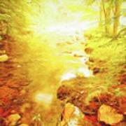 Mountain Stream In Summer Mist Poster
