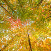 Natures Canopy Of Color Poster