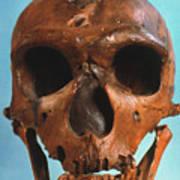 Neanderthal Skull Poster