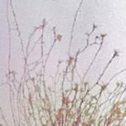 Nerve Cell Culture, Sem Poster