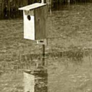 Nesting Box Poster