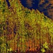 Night Trees Poster