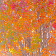 Orange And Red Autumn Poster