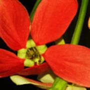 Orange Flower Poster
