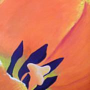 Orange Tulip Poster