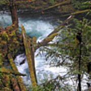Oregon Stream Poster
