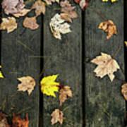 Original Autumn Foliage Poster