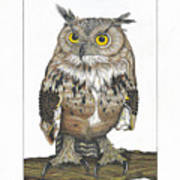 Owl In Pose Poster