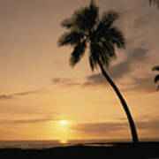Palm At Sunset Poster