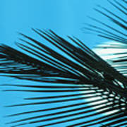 Palm Frond Silhouette Poster