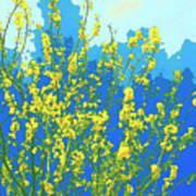 Palo Verde Spring Poster
