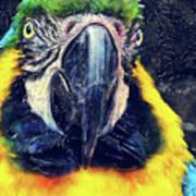 Parrot Art  Poster