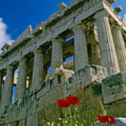 Parthenon With Poppies Poster