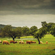Pasturing Cows Poster