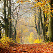 Path Of Red Leaves Towards Light In Fall Forest Poster