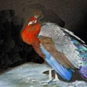 Peacock II Poster