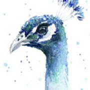 Peacock Watercolor Poster