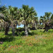 Pelican Island In Florida Poster