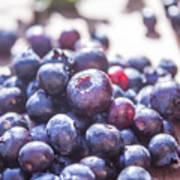 Picking Huckleberries Poster