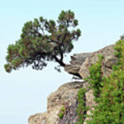 Pine Tree On A Rock Poster