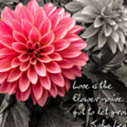Pink Dahlia With John Lennon Quote Poster