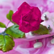 Pink Rose 5 Poster