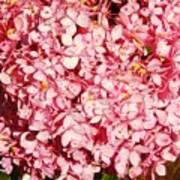 Prettiest Pink Poster