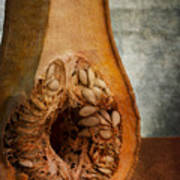 Pumpkin Anatomy Poster