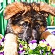 Puppy Oskar Poster