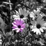 Purple Flower Poster