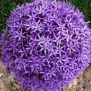 Purple Globe Poster