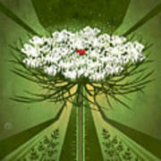 Queen Anne's Lace Print Poster