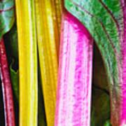 Rainbow Chard Poster