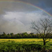 Rainbow Fields Poster