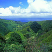 Rainforest Near Hana Poster