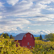 Red Barn And Mt Hood Poster