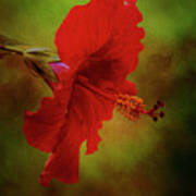 Red Hibiscus Art Poster