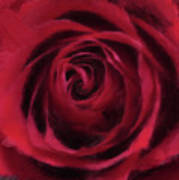 Red Rose Poster