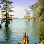 Reelfoot Lake Poster
