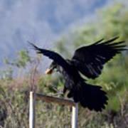 Resident Raven Poster