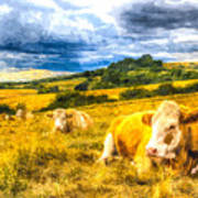Resting Cows Art Poster