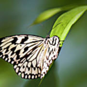 Rice Paper Butterfly 5 Poster