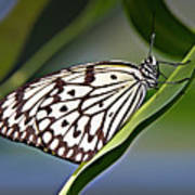 Rice Paper Butterfly 8 Poster