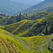 Rice Terraces In Guilin, China  Poster