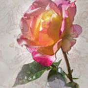 Rosa, 'glowing Peace' Poster