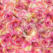 Roses Background Poster