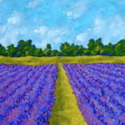 Rows Of Lavender In Provence Poster