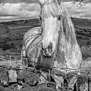 Rustic Horse  Poster