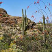 Saguaro National Park East Scene Iv Poster